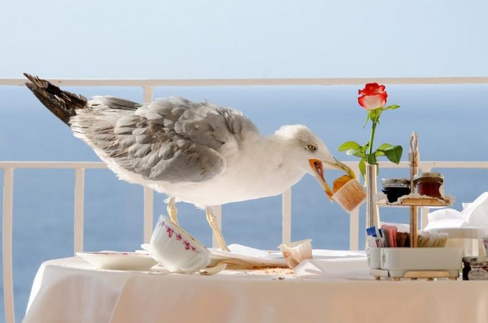 Breakfast-Thief Not Just Animals! They Are Real & Incredible Thieves