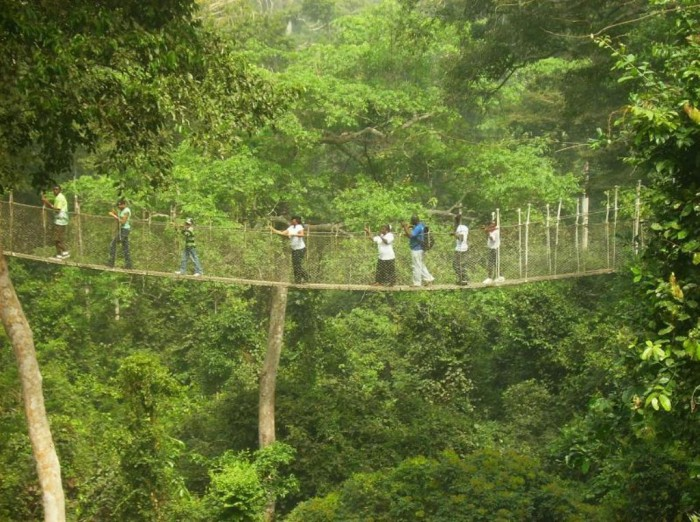 Canopy-Walk The World's 15 Scariest Bridges that Will Freeze Your Heart