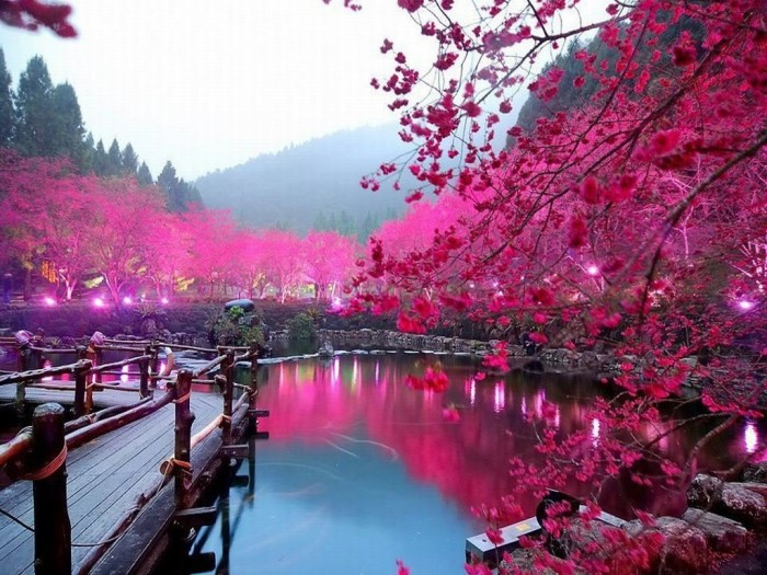 Cherry-Blossom-Lake-Sakura-Japan Top 10 Most Powerful Countries in the World