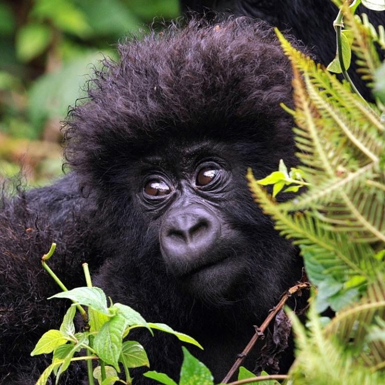 Democratic-Republic-Congo_9Q6-ZS4U Top 10 Worst Governments in the World