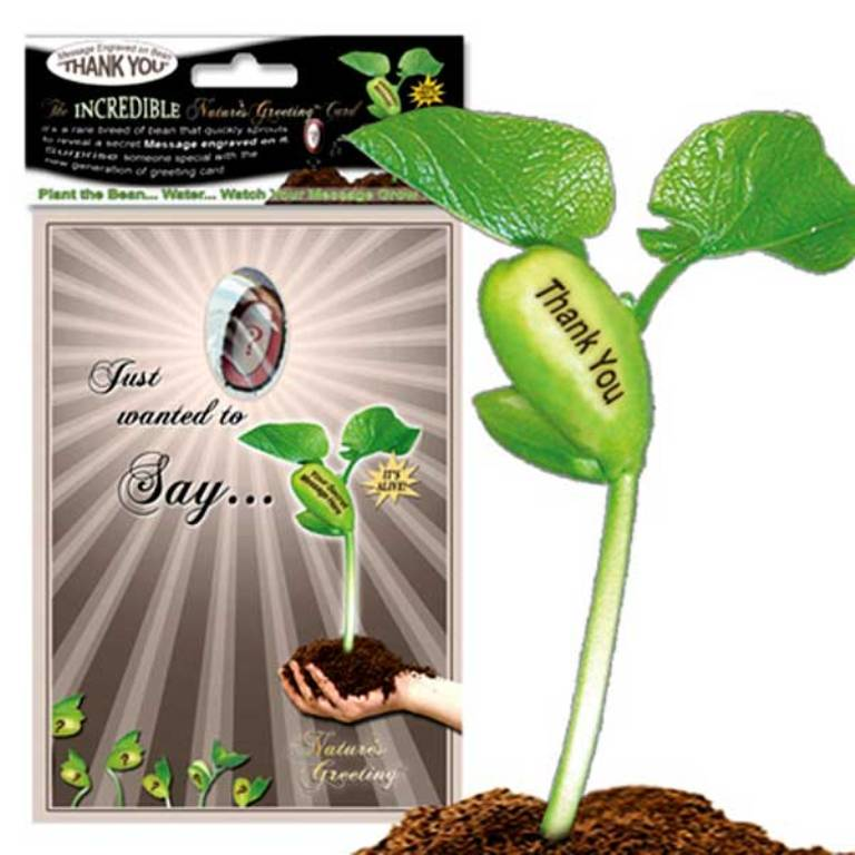 Magic-Bean-Plant-Gift-Card- 30 Amazing & Affordable Thank You Gift Ideas