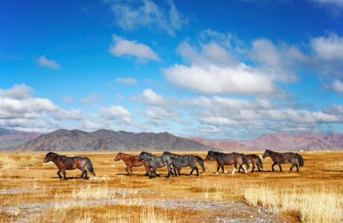 Mongolia-Horses-on-Steppes-Mongolia_20090303110707 Top 10 Best Countries to Visit in the World
