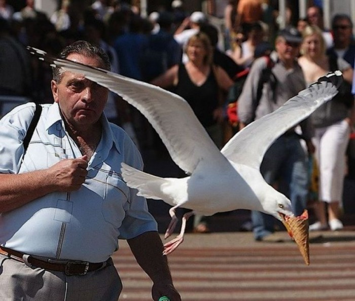 Seagull-Nasty-Thieves1 Not Just Animals! They Are Real & Incredible Thieves