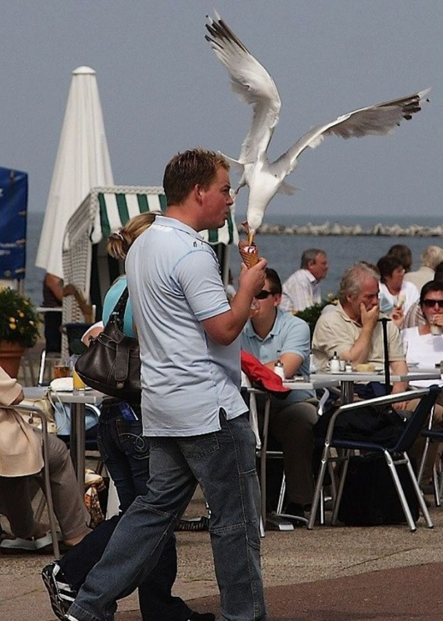 Seagull-Nasty-Thieves11 Not Just Animals! They Are Real & Incredible Thieves