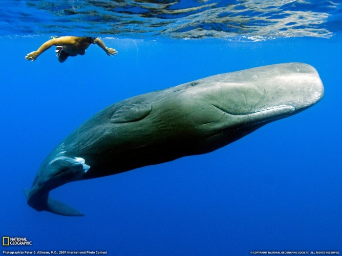Sperm-Whale3 Not Just Animals! They Are Real & Incredible Thieves
