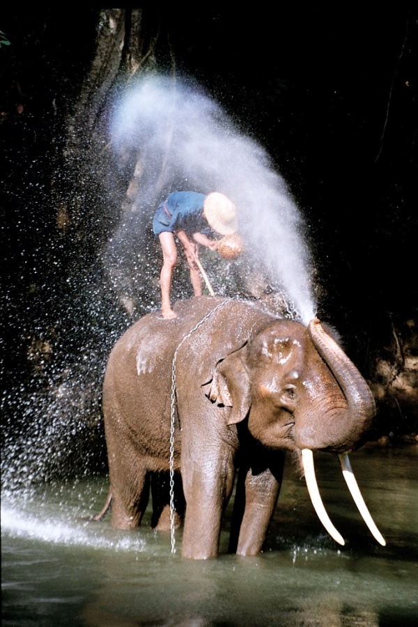 Thailand_elephant Top 10 Greatest Countries to Retire
