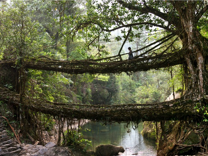 The-living-tree-root-brid-012 Have You Ever Seen Breathtaking & Weird Bridges Like These Before?