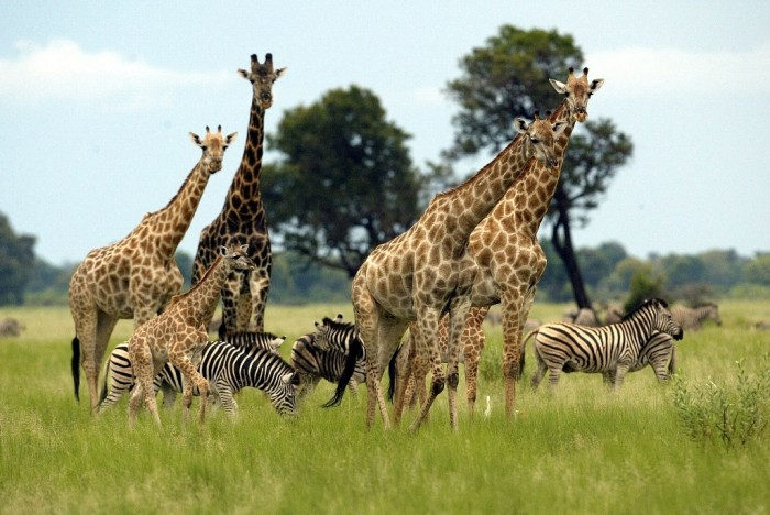 Zimbabwe-Tourism-Slumps-because-of-Which-Airlines-Meshed Top 10 Best Countries to Visit in the World