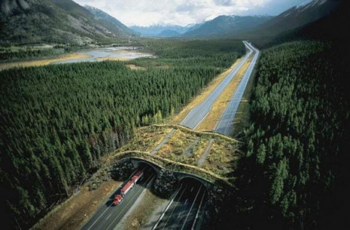 banff-national-park-alberta-canada-animal-bridge-wildlife-overpass-e1350161755806 Have You Ever Seen Breathtaking & Weird Bridges Like These Before?