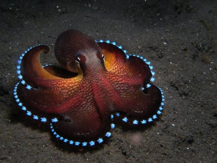 coconut-octopus3 Not Just Animals! They Are Real & Incredible Thieves