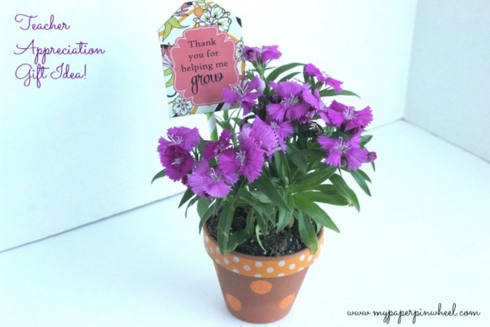 grow 30 Amazing & Affordable Thank You Gift Ideas