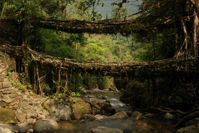 living-root-bridges-meghalaya-india Have You Ever Seen Breathtaking & Weird Bridges Like These Before?
