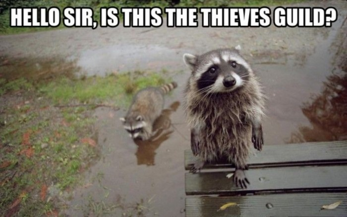 looking-for-the-thieves-guild Not Just Animals! They Are Real & Incredible Thieves