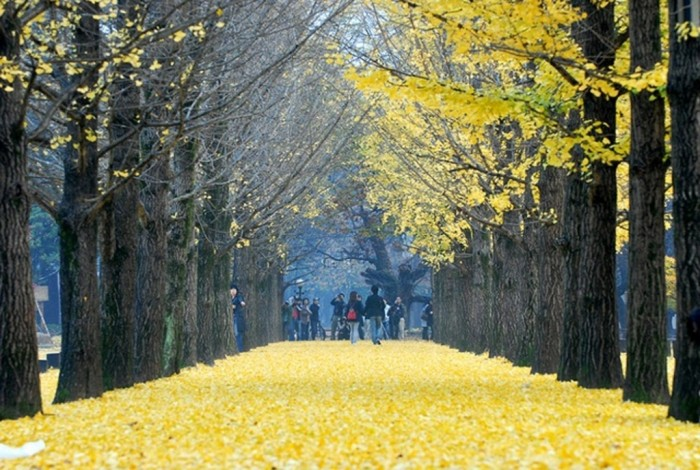 nami-island Top 10 Richest Governments in the World