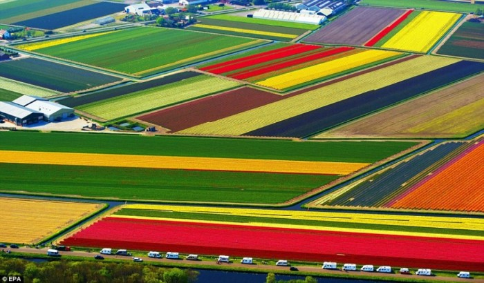 tupils-netherlands Top 10 Best Quality of Life Countries