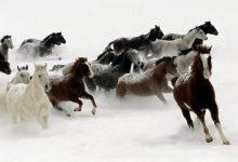 Photo of 45 Elegant & Breathtaking Horse Hair Bracelets