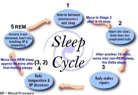sleepcycle Do You Know How Many Hours Of Sleep You Need?