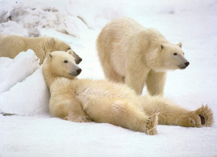 PolarBearsRelaxing Top 7 Predictions & Nostradamus Prophecies