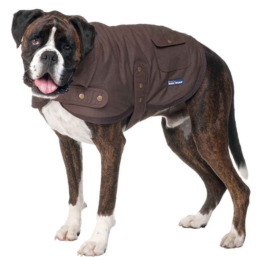 13664.tag_.1 Top 35 Winter Clothes for Dogs
