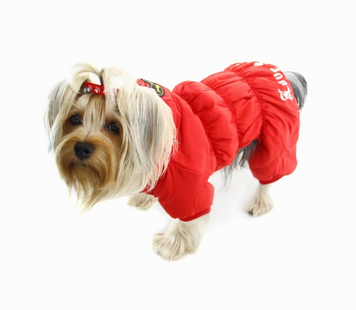 1589_P_1379224962010 Top 35 Winter Clothes for Dogs