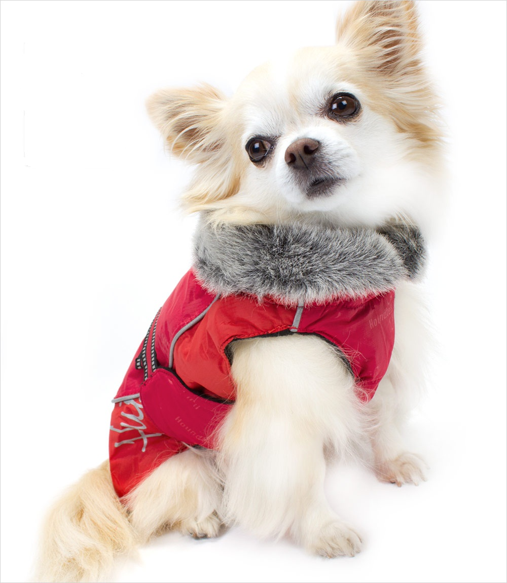 Hurtta-Red-Winter-Dog-Jacket-Chihuahua_pu Top 35 Winter Clothes for Dogs