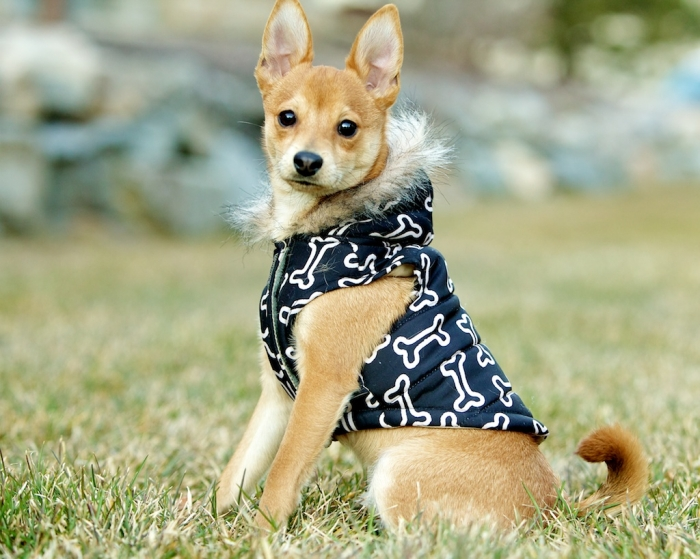 IMG_2607 Top 35 Winter Clothes for Dogs