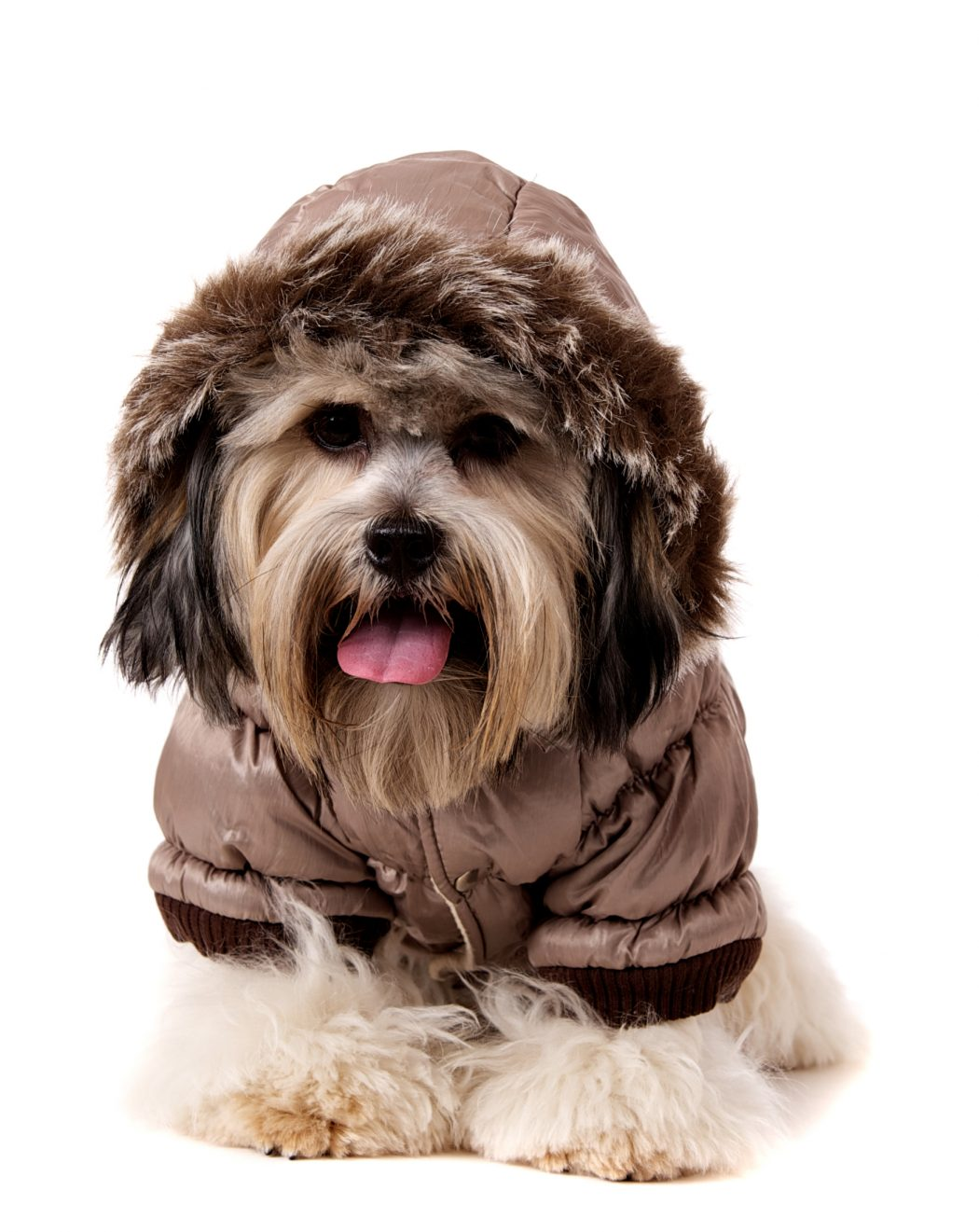 Luxury-Quilted-Parka-with-Detachable-Hood1 Top 35 Winter Clothes for Dogs
