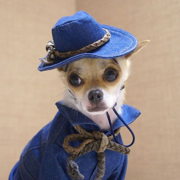 Montijiro-best-dressed-dog_6 Top 35 Winter Clothes for Dogs