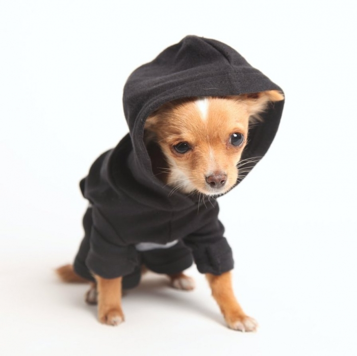 crossbrush_doggie_hoodie_by_deviantwear-d4h3jb0 Top 35 Winter Clothes for Dogs