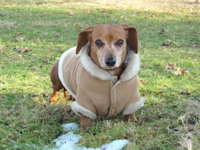 dogcoat_022013_st_tif_ Top 35 Winter Clothes for Dogs