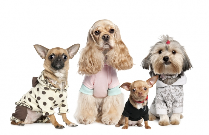 iStock_000009204141Medium Top 35 Winter Clothes for Dogs