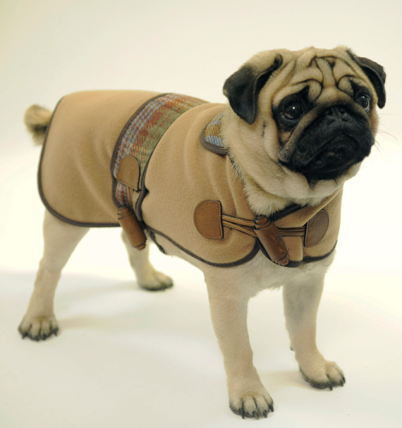 mulberry-Dog-2 Top 35 Winter Clothes for Dogs
