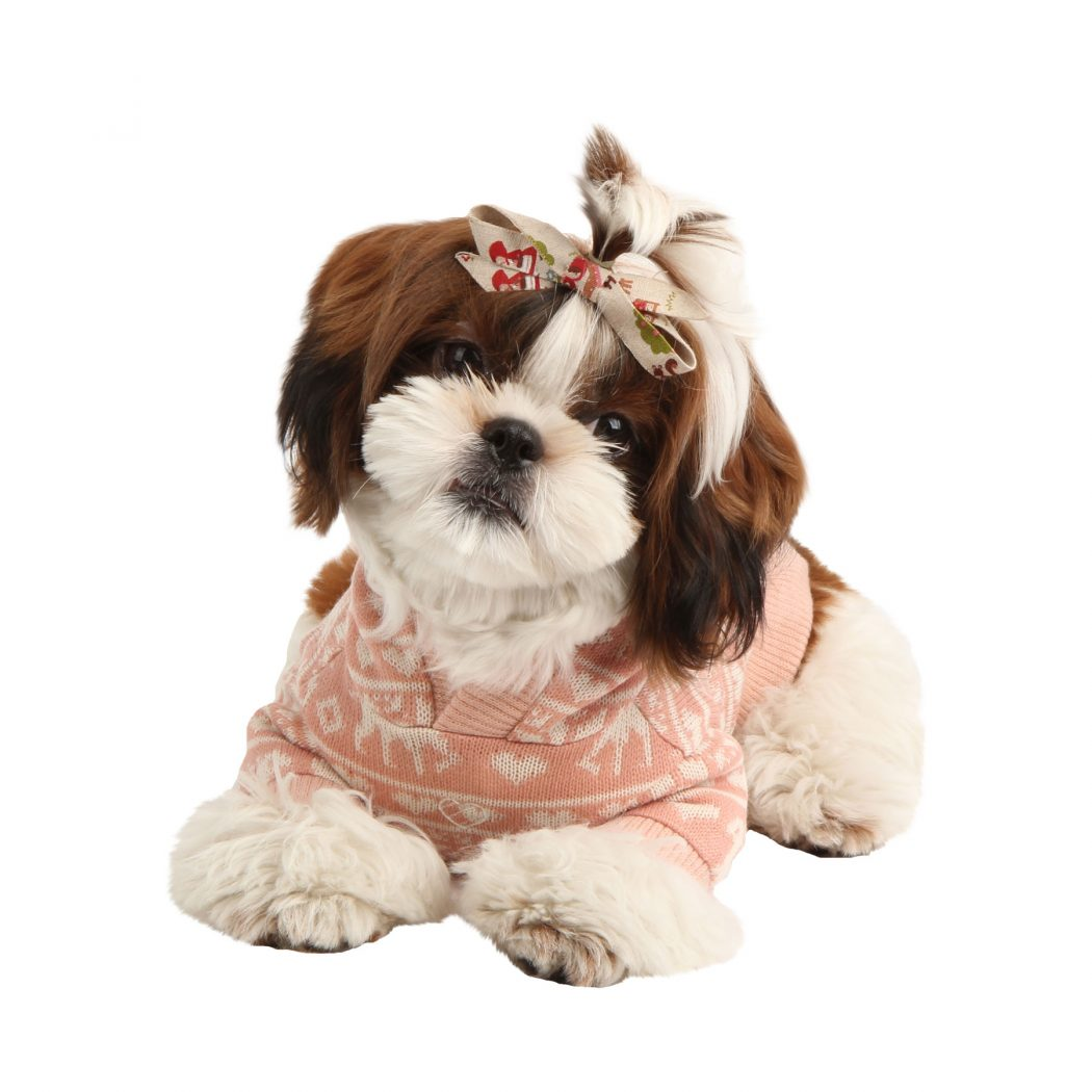 namd-ts6152-1800 Top 35 Winter Clothes for Dogs