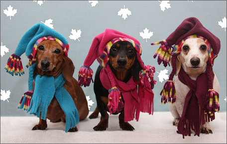winterdogs Outdoor Corporate Events and The Importance of Having Canopy Tents