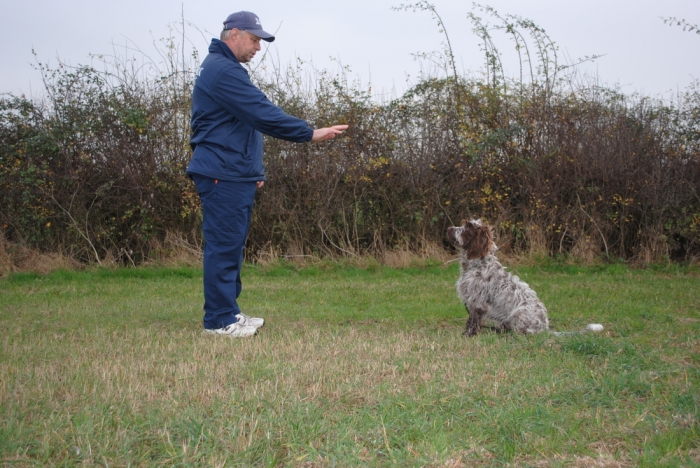 5336187_orig How to Train Your Dog