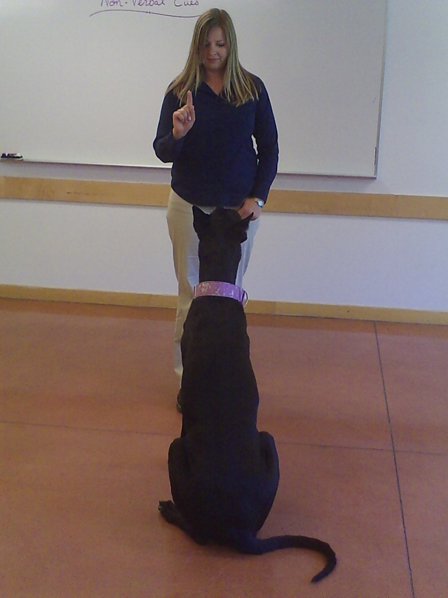 Sit How to Train Your Dog