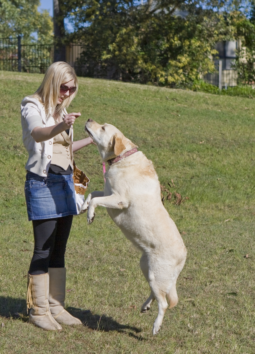 bigstock-Pretty-Girl-With-Labrador-7356529 How to Train Your Dog