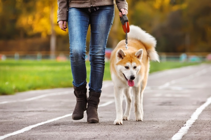 dog-walking1 How to Train Your Dog