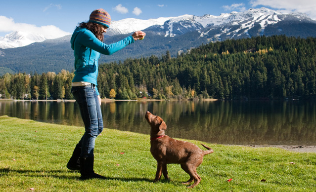 istock_000014173674small How to Train Your Dog