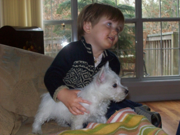 019.103121032 5 Most Hidden Facts About Westie Puppies ... [Exclusive]
