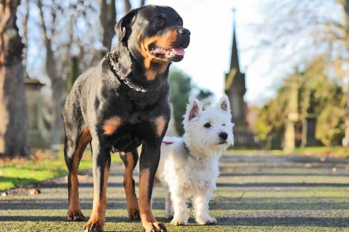 CS52553345Teresa-Patterson 5 Most Hidden Facts About Westie Puppies ... [Exclusive]