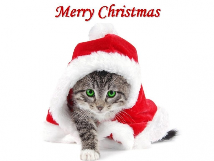 Christmas-Kitten-Wallpaper Best 20 Merry Christmas Greeting Cards ... [Exclusive Designs]