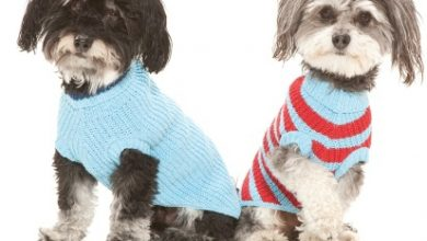 Photo of Top 25 Breathtaking Dog Sweaters for Your Dog