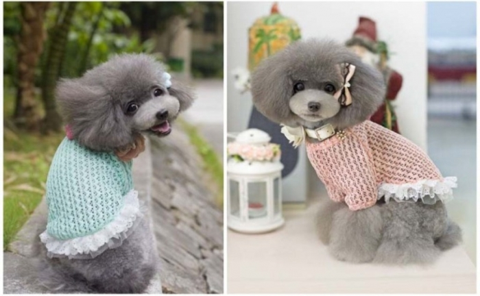 Free-Shipping-font-b-petco-b-font-small-fresh-cherry-font-b-sweater-b-font-pet Top 25 Breathtaking Dog Sweaters for Your Dog