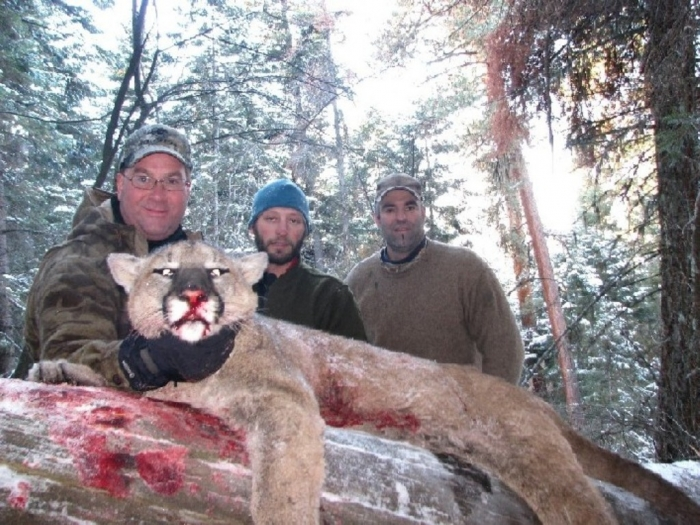 """Idaho-Mountain-Lion-Hunting-Outfitter Mountain Lion """"The Large Cat"""" ... Most Hidden Facts"""