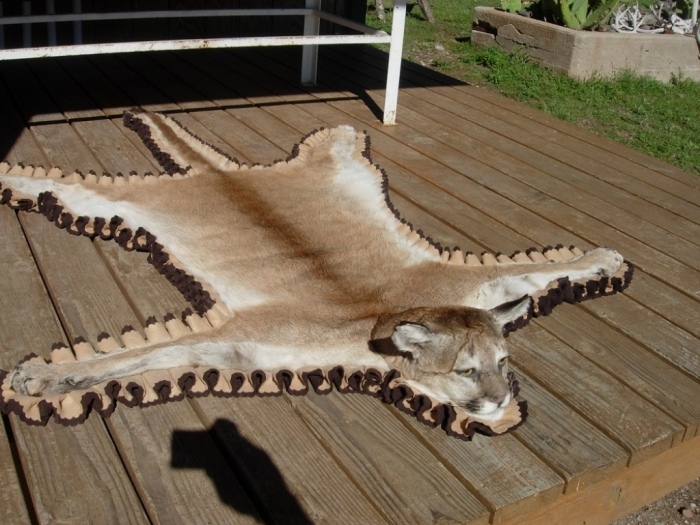 """Jerry_Andazola_New_Mexico_Mountain_Lion_Rug_2006D Mountain Lion """"The Large Cat"""" ... Most Hidden Facts"""