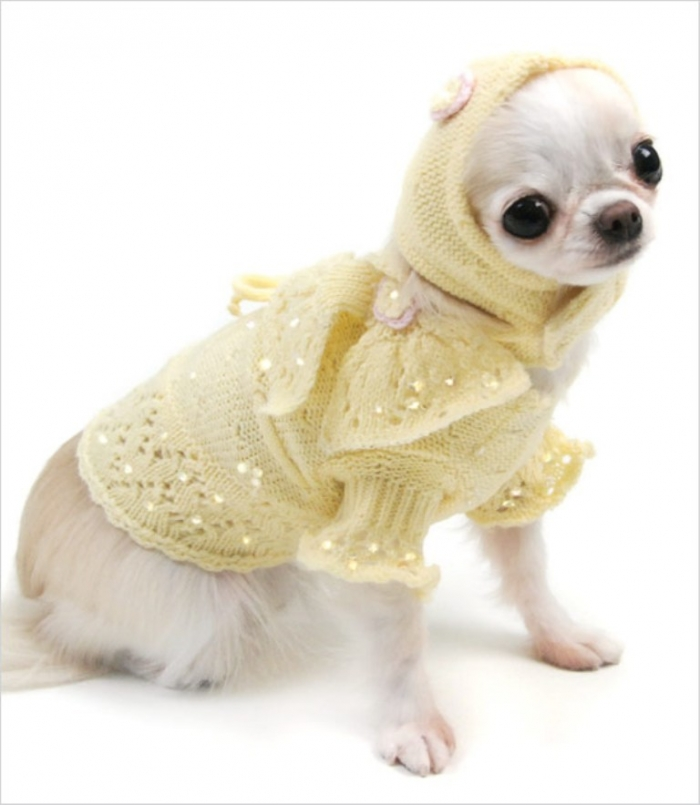 Oscar-Newman-Buttercup-Baby-Dog-Sweater-Set_pu Top 25 Breathtaking Dog Sweaters for Your Dog