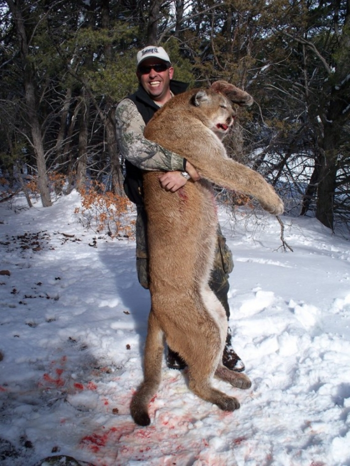 """colorado-mountain-lion-hunting Mountain Lion """"The Large Cat"""" ... Most Hidden Facts"""