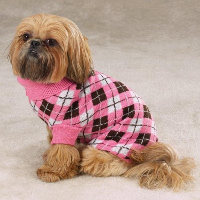 собака-свитер