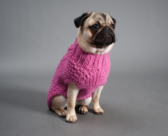 dogs-94-1024x830 Top 25 Breathtaking Dog Sweaters for Your Dog